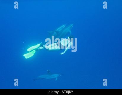 Schnorchler und Delfinen; Stenella longirostris - Stockfoto
