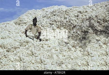 Baumwolle (Gossypium spec.), Arbeiter sitzt auf einem Haufen von Baumwolle, Gambia - Stockfoto