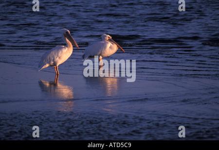 Wichtigste Hafenstadt Walvis Bay in Namibia der Lagune ist Namibias wichtigste Feuchtgebiet mit Flamingos und seltene - Stockfoto