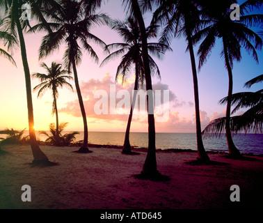 Palmen sind gegen einen bunten Himmel bei Sonnenuntergang auf den Bahamas Silhouette. - Stockfoto
