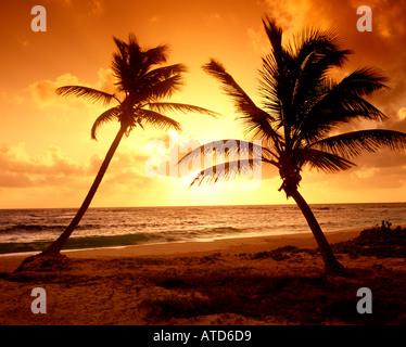 Palmen sind Silhouette gegen einen feurigen Himmel bei Sonnenuntergang auf der Karibik Insel St. Maarten - Stockfoto