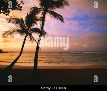 Palmen sind gegen einen rosa und blauen Himmel bei Sonnenuntergang auf Hawaii abhebt. - Stockfoto