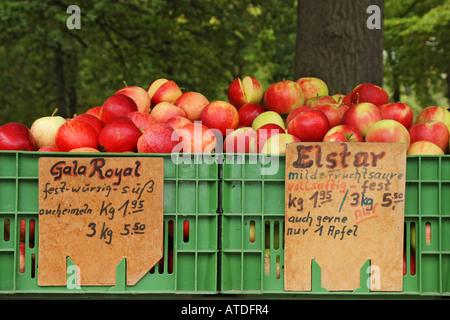Äpfel in zwei Arten verkauft: Royal Gala und Elstar - Stockfoto