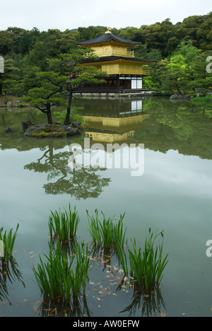 Kyotos Goldenen Pavillon oder Kinkakuji mit angehenden Schwertlilien im Vordergrund - Stockfoto