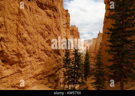 Navajo Loop Trail in Bryce Canyon Nationalpark - Stockfoto