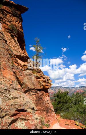 Baum auf einer Klippe - Stockfoto
