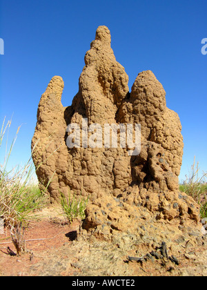 Termite Hügel Northern Territories - Stockfoto