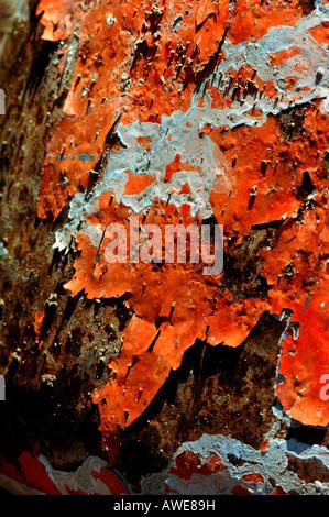 Orange & weiß farbig lackiert, ein rostiges Metall Oberfläche abziehen. - Stockfoto