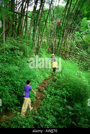 Menschen, die Weg durch den Dschungel wandern - Stockfoto