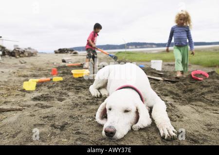 Hund am Strand schlafen, während die Kinder spielen - Stockfoto