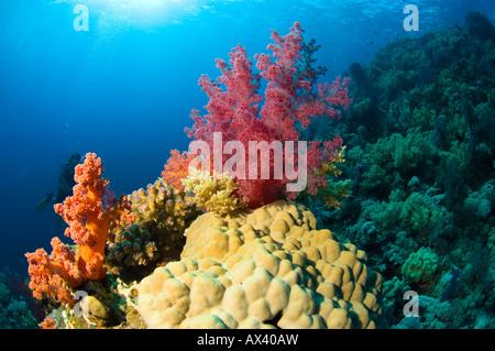 Koralle rot Brokkoli - Stockfoto