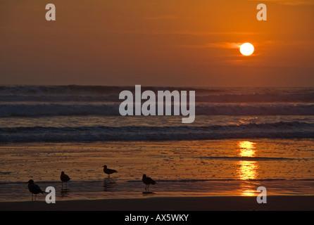 Sonnenuntergang mit Möwen am Strand von Arica, Pazifik, nördlich von Chile, Südamerika - Stockfoto