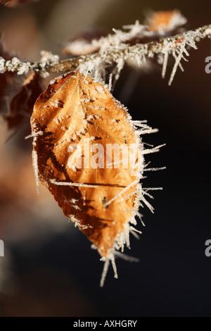 DEU Deutschland Winter Tag gefrorene Pflanzen und Gegenstände Raureif Eiskristalle - Stockfoto