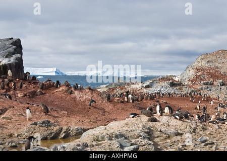 Adelie-Pinguine am Ufer des Gourdin Insel mit Eisberg im Hintergrund - Stockfoto