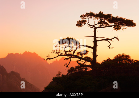 Kiefer, weiße Wolke landschaftlich reizvollen Gegend, Huang Shan (Yellow Mountain), UNESCO-Weltkulturerbe, Provinz - Stockfoto