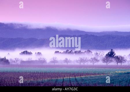 Strahlung Nebel steigt aus den Weinbergen bei Sonnenaufgang einen Winter mit Nebel rollt über die Berge an der Caost - Stockfoto
