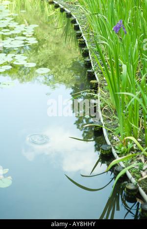 Teich mit Seerosen, Nahaufnahme - Stockfoto
