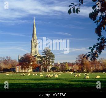 """Kathedrale von Salisbury im herbstlichen Abendlicht gesehen von den """"Auen"""" mit Schafbeweidung im Vordergrund - Stockfoto"""