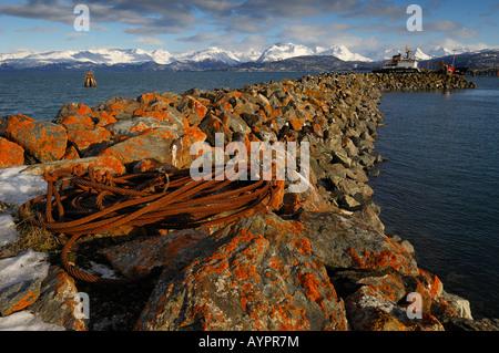 Flechten bedeckten Felsen verwendet von Eagles als eine Landung Barsch, Homer Hafen, Halbinsel Kenai, Alaska, USA - Stockfoto