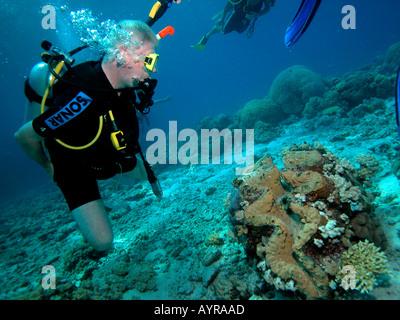 Scuba Diver Ocean Coral marine Leben zu betrachten - Stockfoto
