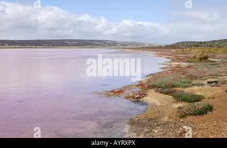 Ufer des Hutt Lagune, rosa Seen, Port Gregory, Western Australia, Australien - Stockfoto