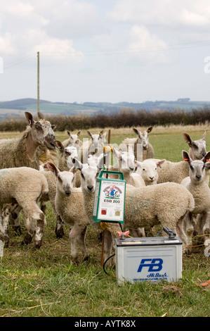 Elektrozaun und Schafe Stockfoto, Bild: 29546313 - Alamy