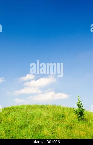 Sommerlandschaft - gesättigt, grünem Rasen und ein Bäumchen auf dem Hügel. - Stockfoto