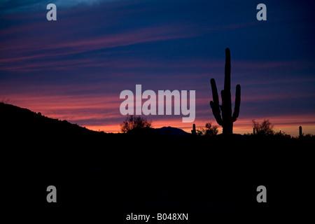 Palo Verde Arizona A Saguaro Kaktus ist gegen den Sonnenuntergang in der Sonora Wüste Silhouette. - Stockfoto