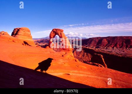 Kolkrabe (Corvus Corax), Delicate Arch, La Sal Range, Arches-Nationalpark, Utah, USA - Stockfoto