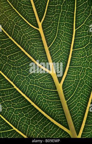 Makro zu studieren, von grünen Blatt - Stockfoto