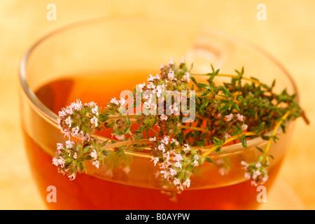 Infusion Thymian Thymus vulgaris - Stockfoto