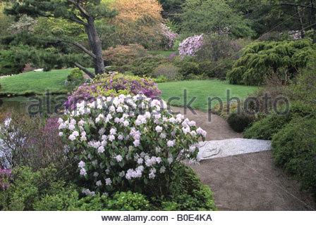 Asticou Azalea Garden in Mt Wüste, Maine, USA - Stockfoto