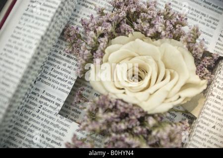 Weiße schöne Rose in einem alten Buch - Stockfoto