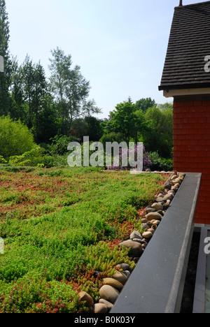 ... Grüne Sedum Dach Auf Erweiterung Haus In Surrey   Stockfoto