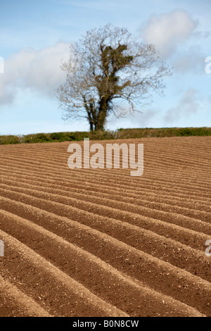 frisch gepflügten Feld mit Hecken und Bäumen im Hintergrund in der Grafschaft, Nord-Irland - Stockfoto