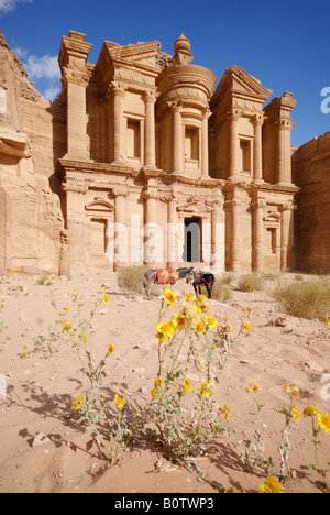 kunstvoll geschnitzte Felsengrab bekannt als Kloster El Deir nabatäische Stadt Petra Jordan Arabia, gelben Blüten - Stockfoto