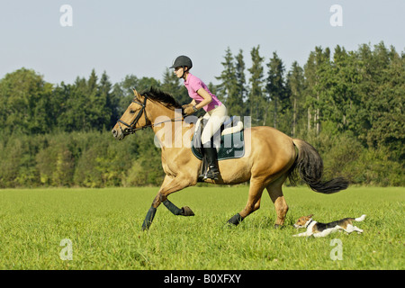 Junge Dame Reiter auf Pferd mit Jack Russell Terrier - Stockfoto