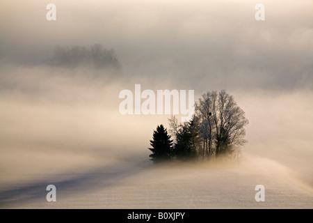 Deutschland, Bayern, Murnau, Misty Landschaft - Stockfoto