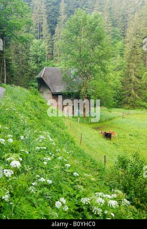 Deutschland, Schwarzwald, Wildgutachtal, Alm - Stockfoto