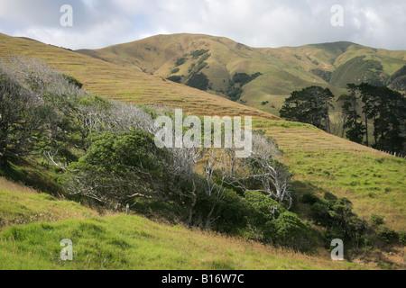 Hügel in Coromandel Peninsula, Neuseeland - Stockfoto