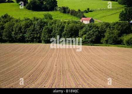 Frisch bepflanzten Feld Ernten zu Wales UK zu wachsen beginnt - Stockfoto