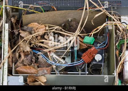 Elektronisches Gerät bedeckt mit Laub und Rasen - Stockfoto
