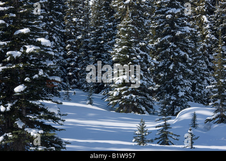 Kanada Alberta Banff National Park schneebedeckte Tannen - Stockfoto