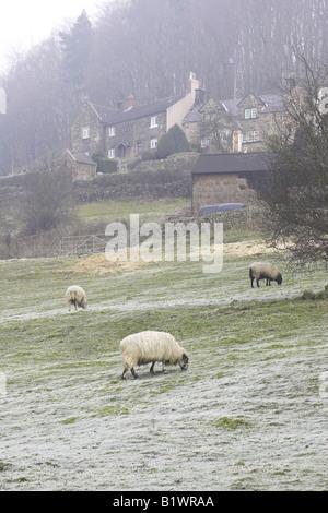 Schafe auf einem Bergbauernhof in Derbyshire, England, Vereinigtes Königreich - Stockfoto