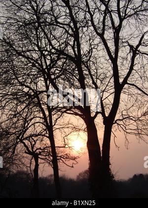 Goldene Sonne in einem warmen Sonnenuntergang Himmel umrahmt von nackten Äste im zeitigen Frühjahr hängen. Bäume - Stockfoto