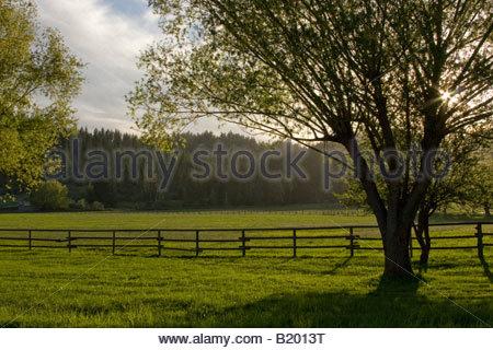 Sunburst durch einen Baum auf einer grünen Weide im Frühling Fernan Idaho - Stockfoto