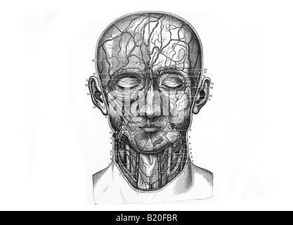 Medizinische Illustration der Kopf Arterien, Venen und Lymphsystem ...