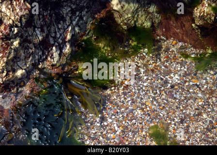 einem bunten Rock Pool am Strand von Thurlestone in South Devon - Stockfoto