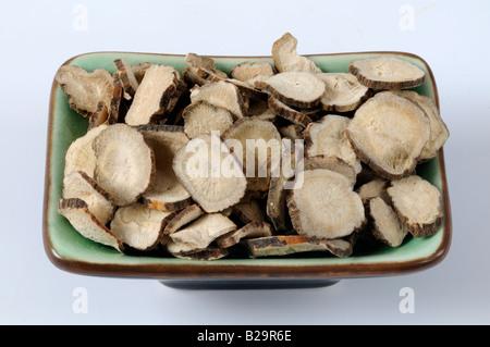Roten Paeony Root / Chi Shao - Stockfoto