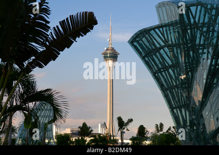 Macau Tower and Convention Centre zwischen Palme und Glas konstruiert Lotus petal - Stockfoto